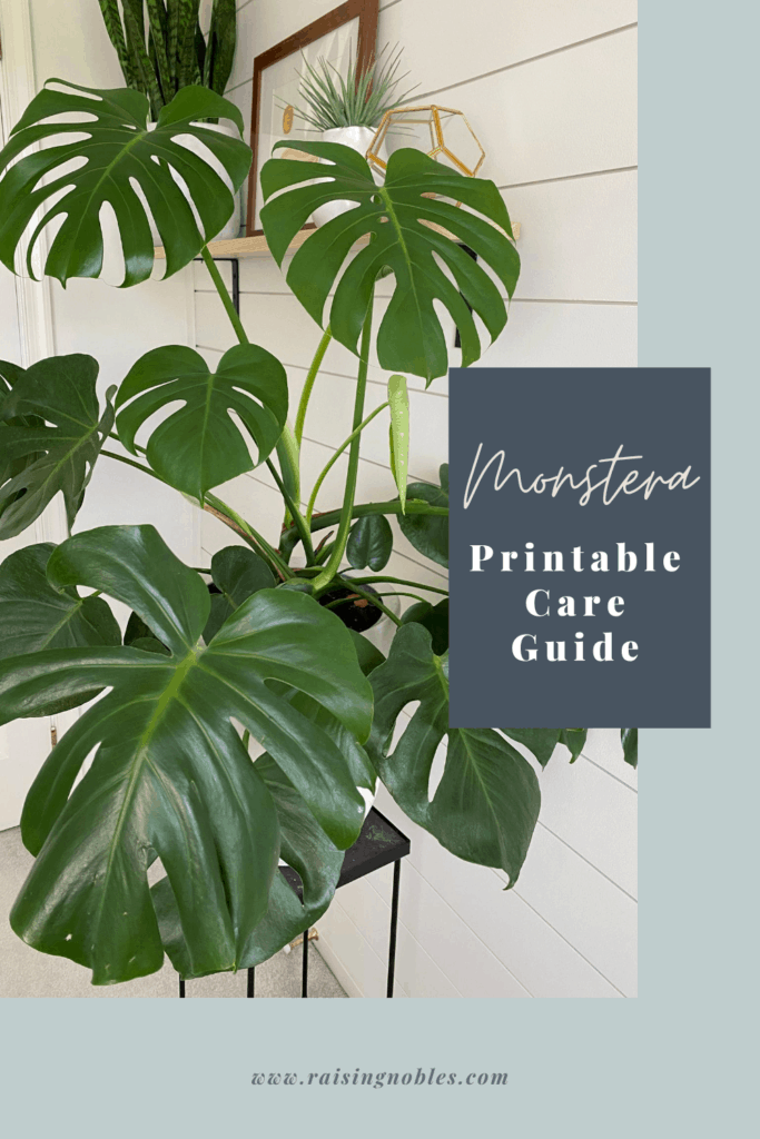 monstera plant guide