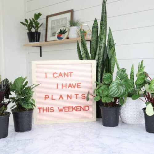 i can't i have plants this weekend