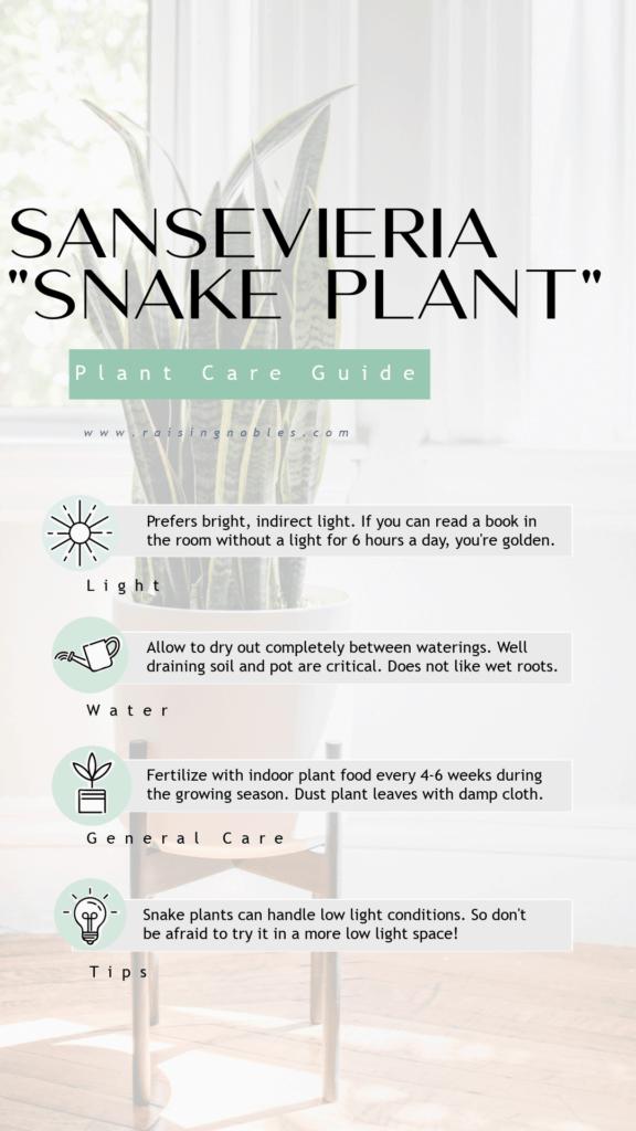 sansevieria plant guide